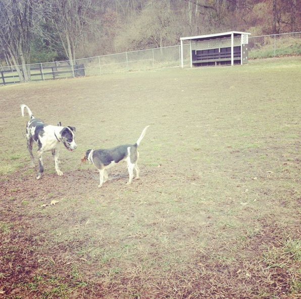 Hanging out at Jackson Dog Park - Vienna, WV - Angus Off-Leash #dogs #puppies #cutedogs #dogparks #vienna #westvirginia #angusoffleash