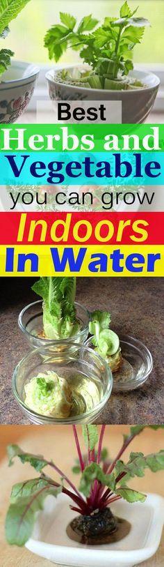 Indoor Kitchen Gardening: Top 10 Vegetables To Grow Indoors