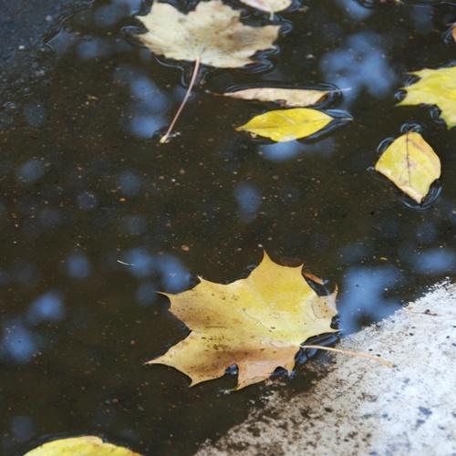 foglie, acqua...