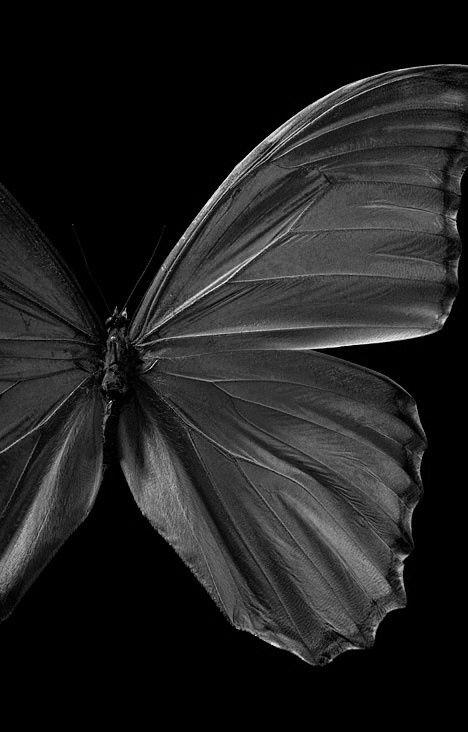 black http://www.forjahispalense.com/