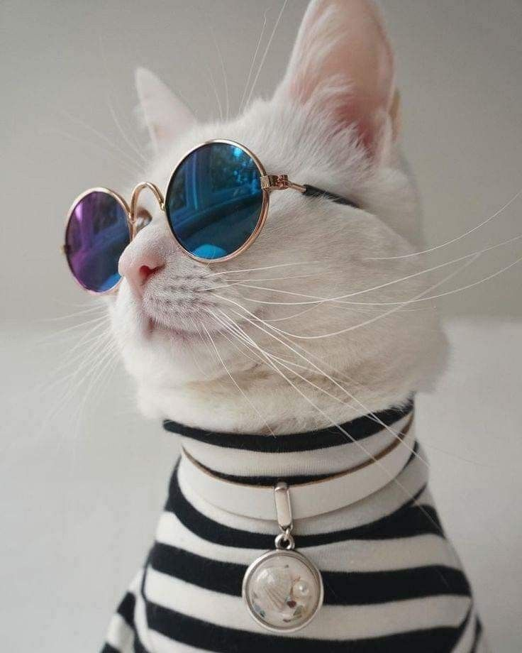 тот картинки на аву четких котов день ваш малыш