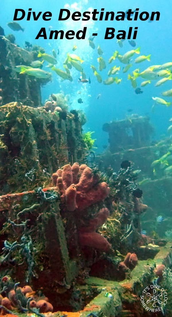 Dive Destination: Amed, Bali! If you are looking for a more quiet place on Bali with awesome diving, the North - East coast is your spot!  http://www.diveoclock.com/destinations/Asia/Indonesia/Bali_Amed/  Dive o'clock!  scuba diving | underwater | ocean | sealife |  nature | oceanlife | coral reef  | divetheworld | scubadiver  | duiken | tauchen | under the sea  | snorkeling | underwater photography | South East Asia | indonesia |