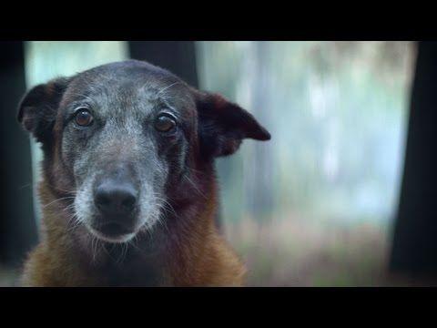 Animaux: La campagne déchirante de 30 millions d'amis contre l'abandon