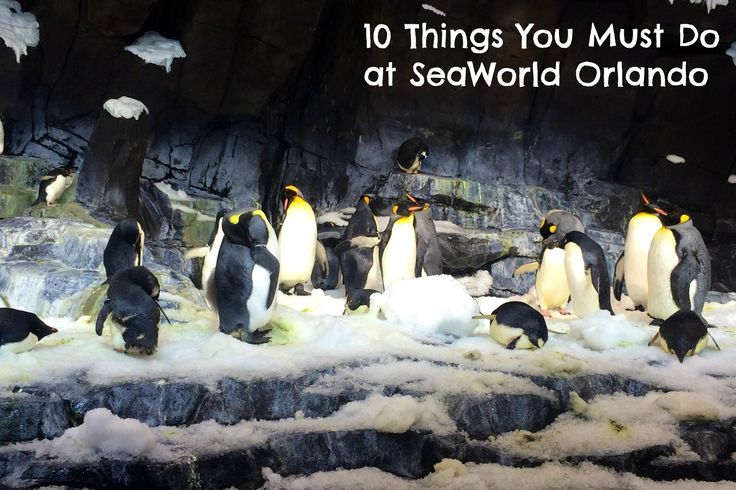 10 Things You Must Do at SeaWorld Orlando - Kidventurous