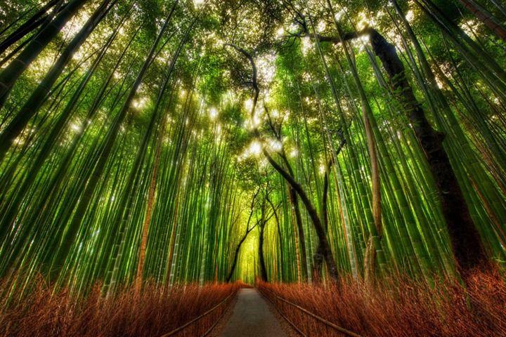 Невероятный растительный мир