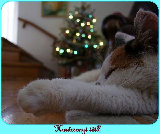 #paw #christmas #cutecat #cat