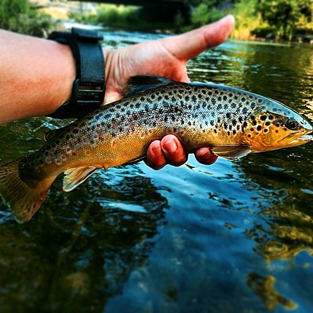 17 best images about fly fishing on pinterest the fly for Best trout fishing in pa