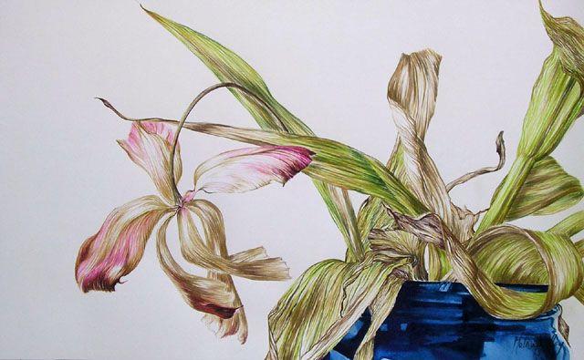 Art by Melissa Halley, Tulip III, 2013, Bistre & Aquarelle, 35 x 56 cm