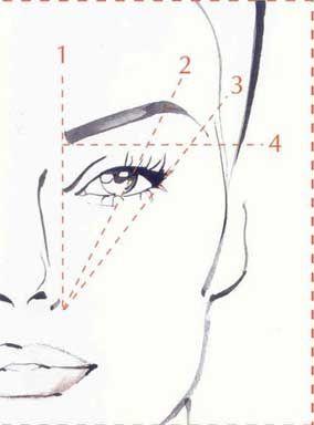 Perfect Eyebrow Shape - Bing Images via https://www.facebook.com/DhomeBAZAAR