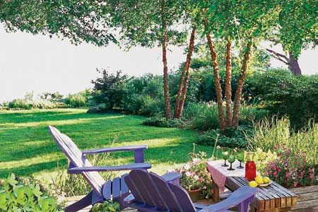 Photo: Karen Bussolini | thisoldhouse.com | from Fast-Growing Shade Trees