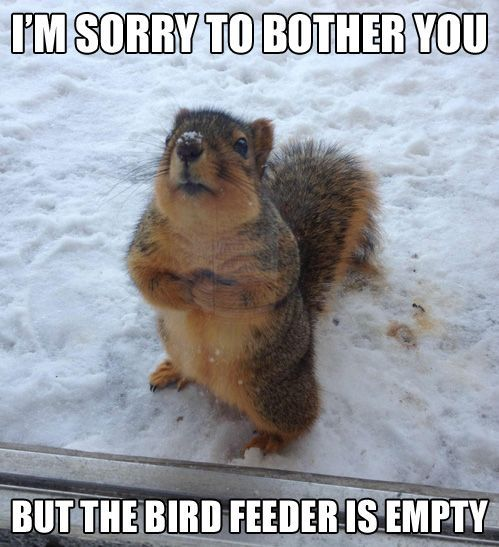 funny squirrel and nut pictures | squirrel Funny Pictures
