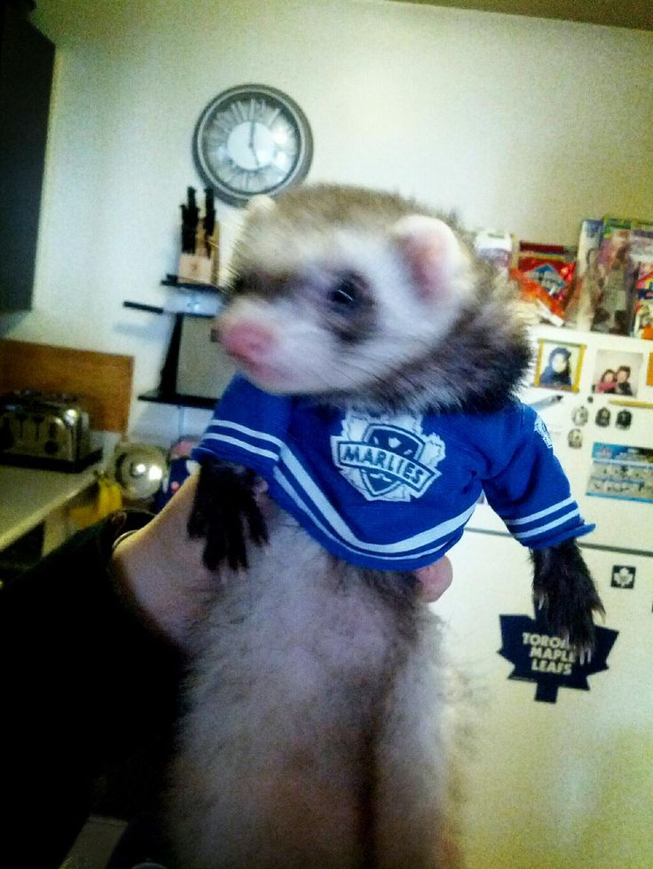 Marlies ferret - Fans come in all shapes and sizes
