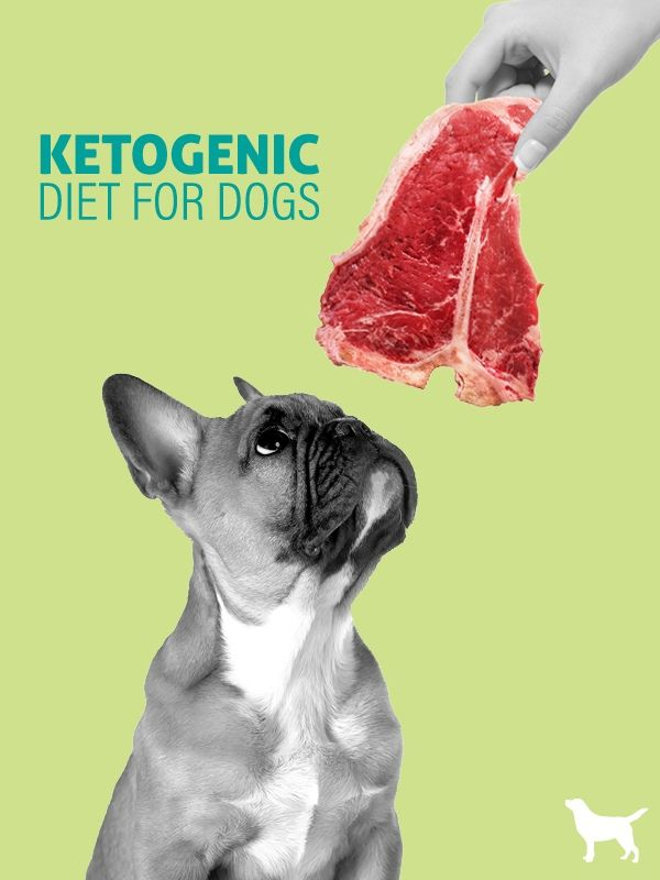 Ketogenic Diet For Dogs Dogs Naturally Ketogenic Diet For Dogs Ketogenic Diet Dog Benefits