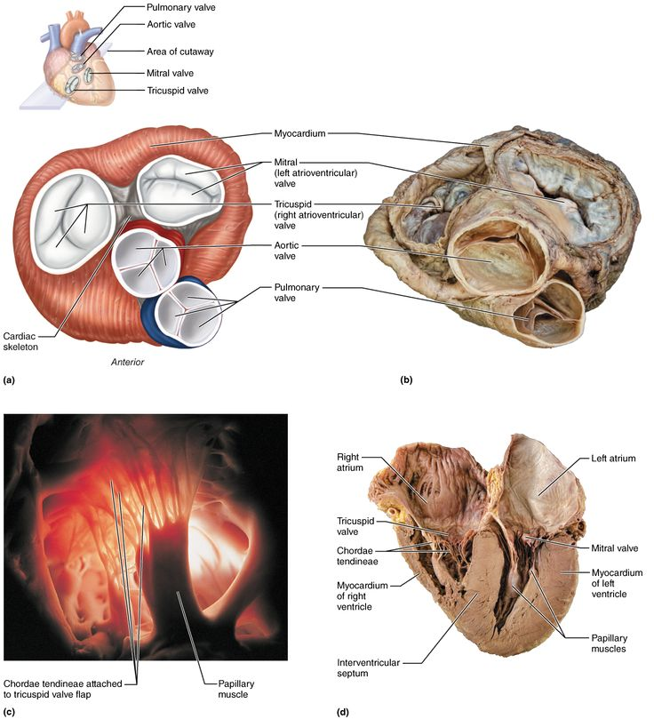 The 269 best Anatomy images on Pinterest | Anatomy, Anatomy ...