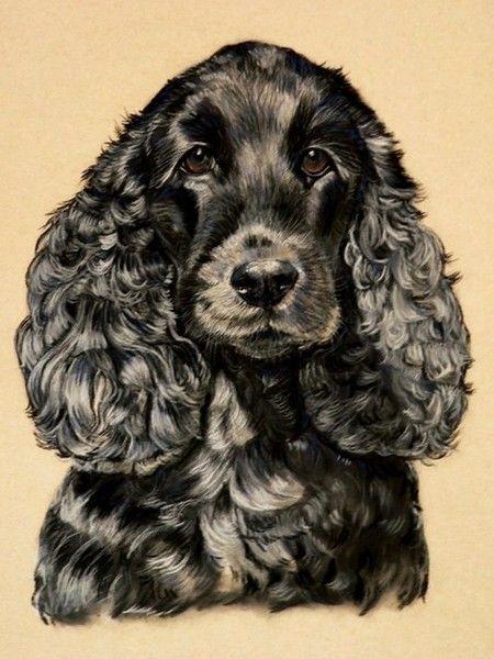 Black Spaniel by Sue Clinker on ARTwanted