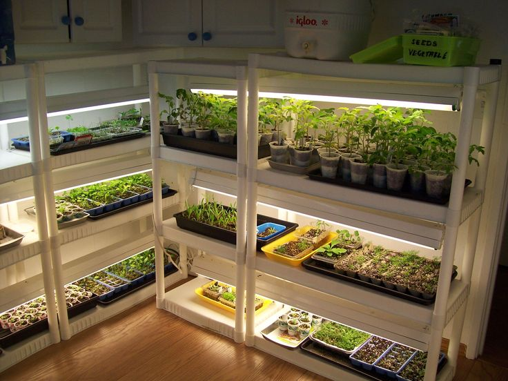 Cheap snap together shelves and shop lights make for a reasonable indoor greenhouse. And you can add as you need more