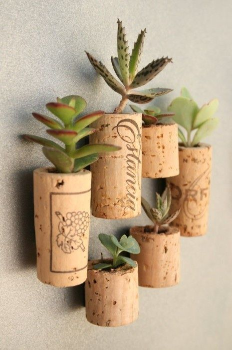 Cubicle mini-garden. Carve out the center of a wine cork. I used a small knife and it took patience. Fill the hole with cactus soil and plant a succulent cutting. A magnet strip I glued to the cork back then displayed on my frig!