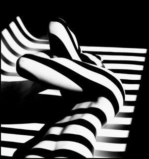 Exposition – Zebras de Francis Giacobetti du 11 octobre au 22 décembre à Paris  | Pixelistes.com