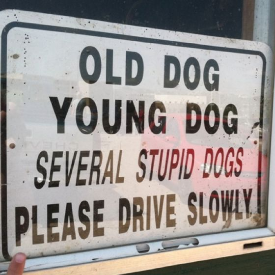 Sign at a local farm...love this!: Dog Signs, Funny Dogs, Old Dogs, Funny Signs, Front Yard, Funny Stuff
