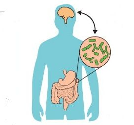 Lactobacillus Acidophilus Benefits for Health, Digestion and Cholesterol http://nootriment.com/lactobacillus-acidophilus-benefits/