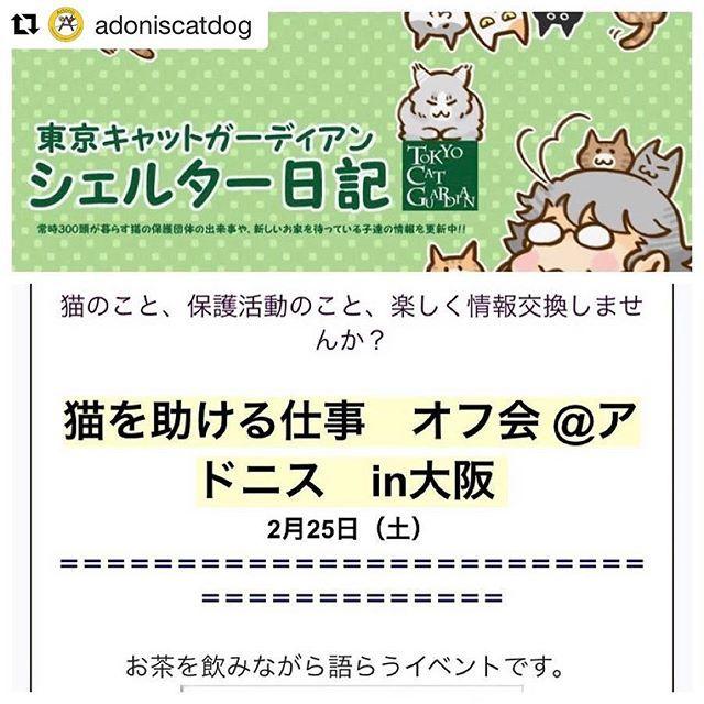 いよいよ今週末開催です٩꒰。•◡•。꒱۶. . あと3名様のお席を用意出来ますので、アドニスの本拠地に遊びに来ませんか₍˄·͈༝·͈˄₎◞ ̑̑ෆ⃛. . #Repost @adoniscatdog with @repostapp ・・・ この度、@tokyocatguardian 東京キャットガーディアン様主催のイベントを、アドニスの本拠地で開催する事が決定致しました‼️. . すでに私のほうで、保護活動に興味を持っておられる親しい方々にはお声がけしております。 . 席が確保出来るかどうか分かりませんので、興味のある方はDMをお願いします٩꒰。•◡•。꒱۶. . 【NPO法人 東京キャットガーディアン】とは、日本で初めての猫カフェ型開放型シェルターを開設し、動物病院や猫付きシェアハウス、猫付きマンションなどの運営を手がけるなど、殺処分減少に大きく貢献されている保護団体です。 . また、アドニスメンバー @yuuki_koma  ユウキさんち のうにちゃんの出身シェルターでもあります!. .…
