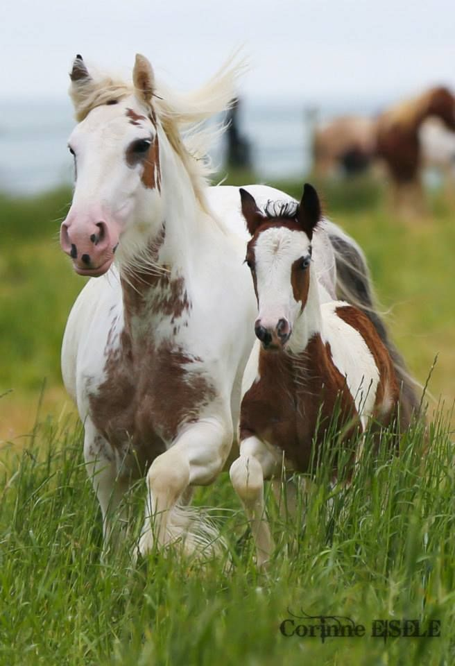 Beauties - mother and baby http://wakeupwithcindy.biz