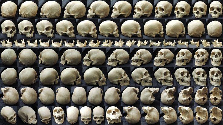Different Angles of a Skull by clz.deviantart.com on @deviantART join us http://pinterest.com/koztar