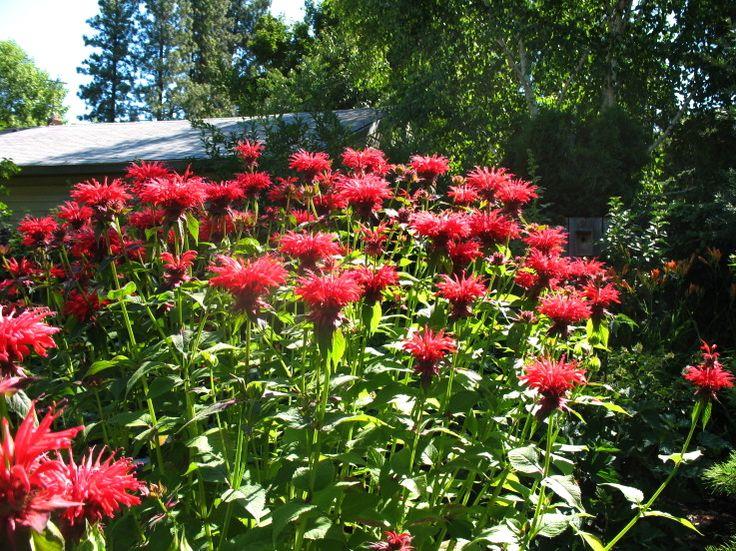 97 best utah native plants images on pinterest