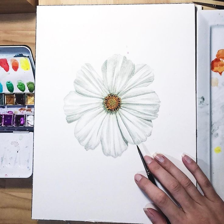 Oh what a lovely Friday! A fascinating seminar at my ye olde Uni campus with my inspiring colleagues. Then a drizzly eve in the #creative cave practicing painting pretty petals.  Meanwhile white petals are surprisingly hard to paint on a white page!  . .  #botanical #thatsdarling #weekend #floral #watercolor #watercolour #annamasonart #greenlifelove