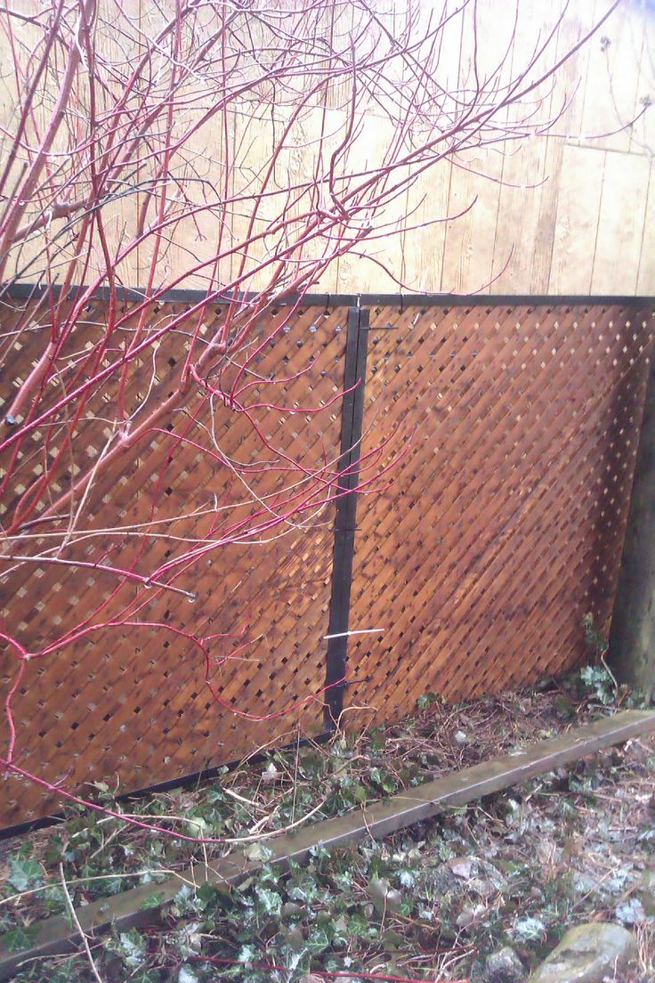 Cover An Ugly Chain Link Fence With Privacy Lattice Framed