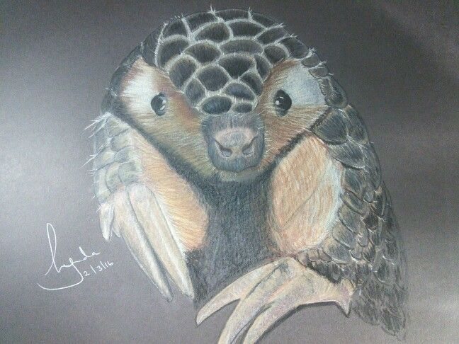 'Papillon' - coloured pencil drawing of a Chinese Pangolin by Lynda Colley Originals