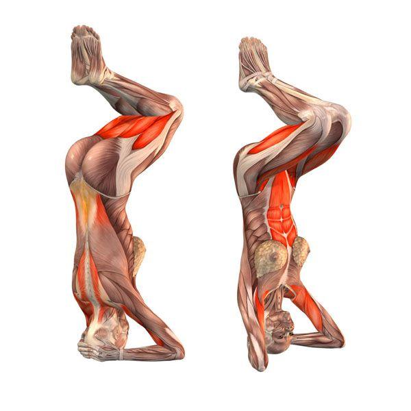 Headstand preparation pose II - Salamba Sirsasana preparation II - Yoga Poses | YOGA.com