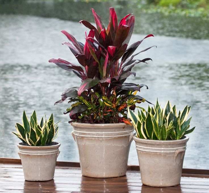 65 best south florida container gardens images on - South florida vegetable gardening ...