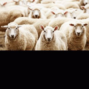 Herd Immunity: Flawed Science and Mass Vaccination Failures