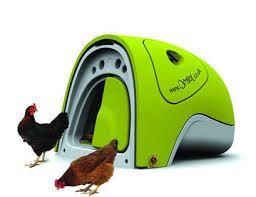 Vida frugal: El gallinero