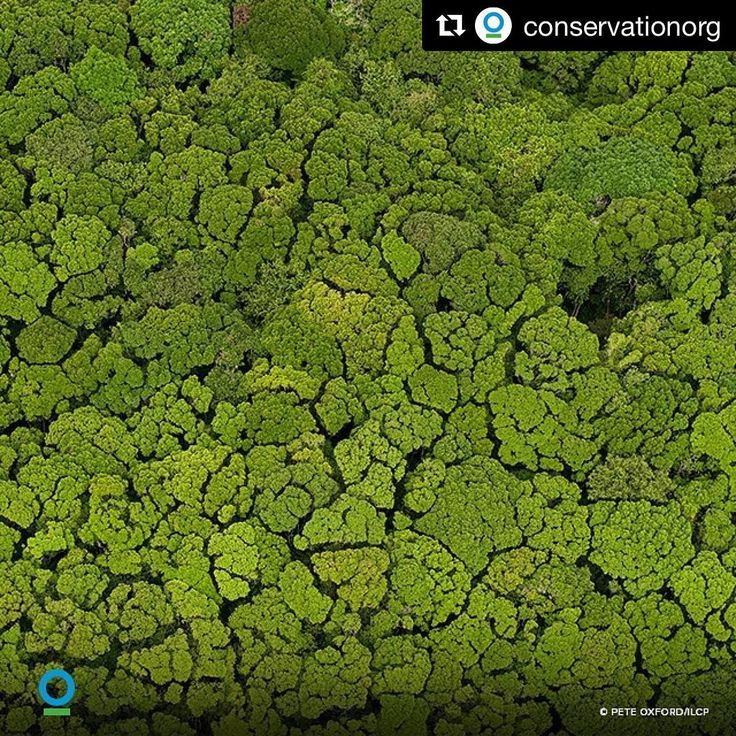Were already seing the effects of man-made climate change.... But nature can help! Find out how at @conservationorg  And have a happy sunny monday   #conservation #natureconservation #environmentalist #naturelover #lungsoftheearth #green #rainforest #photosynthesis #cleanliving #sustainableliving #sustainablefuture #cleanenergy #climatechange #biology #climatechangeisreal #makeadifference #recycle #contribute #traveltheworld #naturephotography