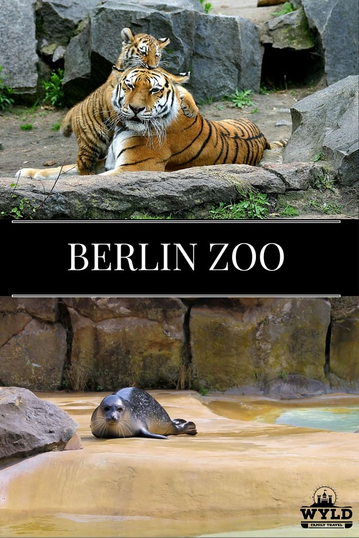 Perfect Berlin Zoo An Absolute Must