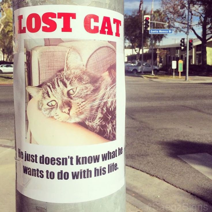 Best Art Images On Pinterest Draw Music And Photography - These hilarious posters keep popping up all over california