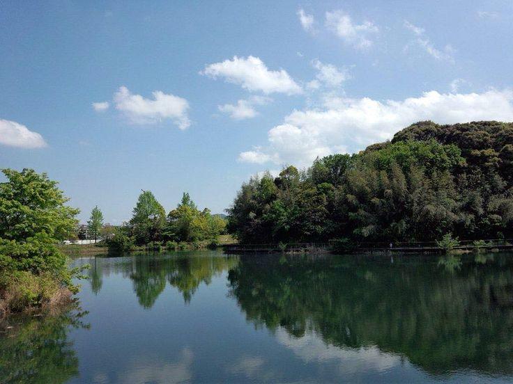 2016/4/22 水城の池 名前はわかりません()春日市のハンズマン隣 街の中の気持ちいい場所です #ため池 #水城 #青空 #風景 #街なか #散歩 #福岡 #春日市 #landscape #forest #city #bluesky by tatu_ta