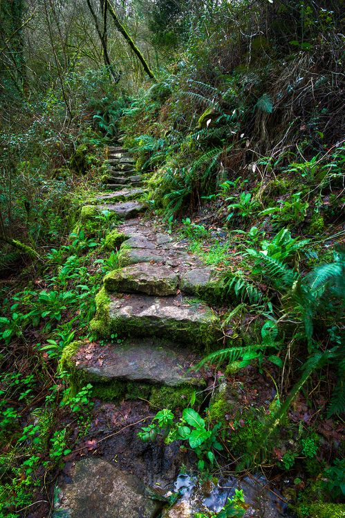 33 best forest reference images on pinterest Types of pathways in landscaping