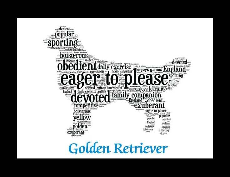 Traits of the Golden Retriever The Golden Retriever was developed largely by Lord Tweedmouth, who in 1868, bred Nous, a yellow Wavy-Coated Retriever to Belle, a Tweed Water Spaniel. They produced four