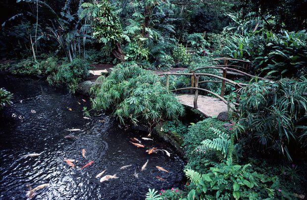 Cómo elegir plantas acuáticas para un estanque de peces