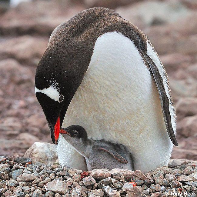 Antarctic Circle Voyage - January 2012