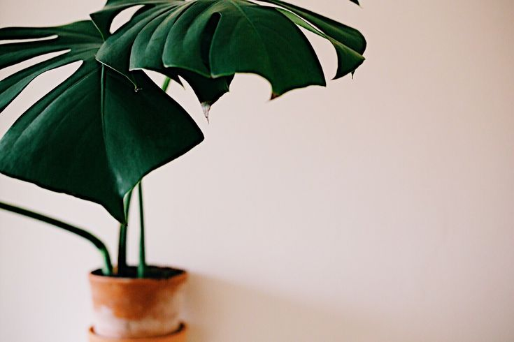 Five easy ways to increase humidity for houseplants.