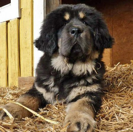 newfie/rottie mix = ADORABLE!!!