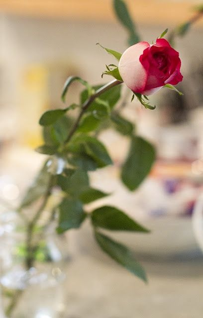 Beautiful Rose Flowers Single Flower Gardening Red Roses Beauty Of Nature Power Romanticism Love