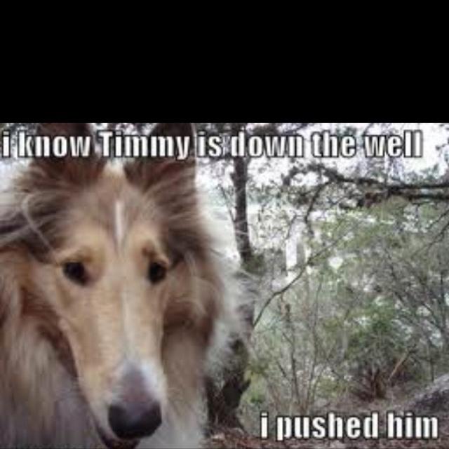 Lassie: Animal Pictures, Laugh, Lassi, Funny Stuff, Humor, Funny Animal, Funny Dogs Pictures, Dogs Funny, Animal Photos