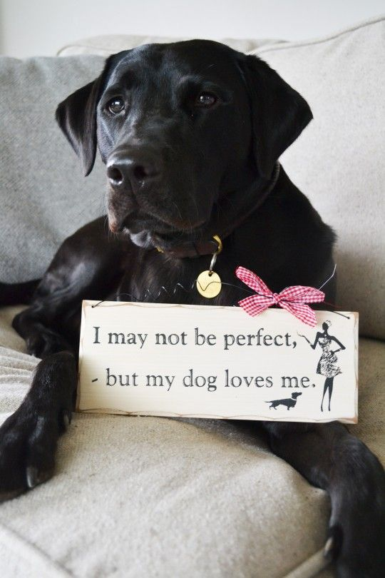 Dog Perfect Sign