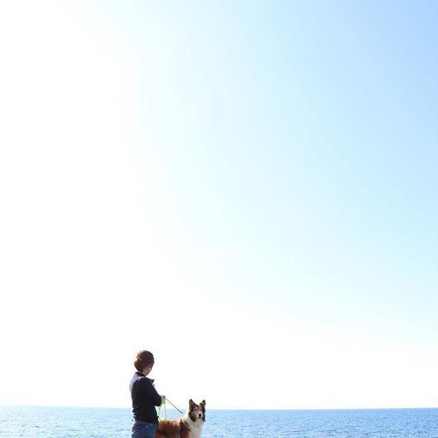 _ . . . 空と海と、犬 . . . #山形県 #鶴岡市 #鼠ヶ関 #空 #海 #写真好きな人と繋がりたい #犬 #dogstagram #canon #eos9000d #無加工 #愛犬 #sheltie #シェルティ #青 #blue