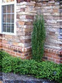 217 Best Images About Evergreen Shrubs On Pinterest